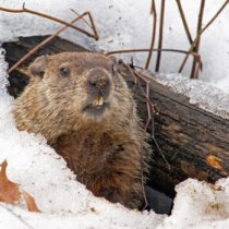 Groundhog Day Lessons and Activities